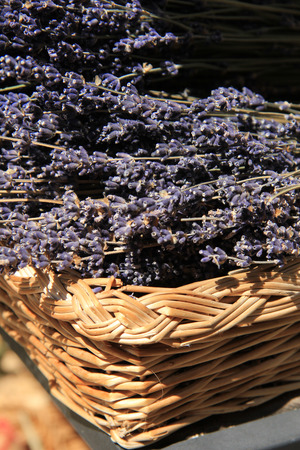 Lavender in a wicker basket in the Provence, France photo