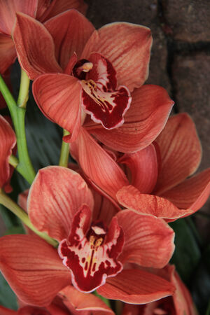Orange cymbidium orchids in a bridal bouquet photo