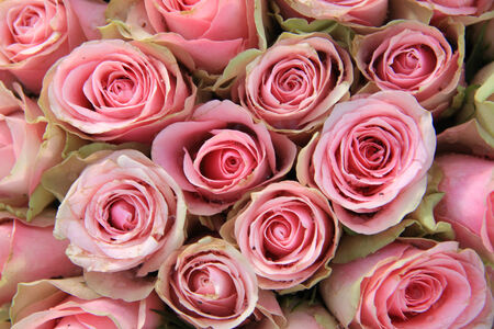Pink roses in a bridal decorative arrangement photo