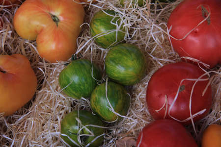 Tomatoes in various colors, shapes and sizes photo