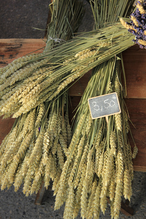 Wheat or corn bouquets, for sale at a French market photo