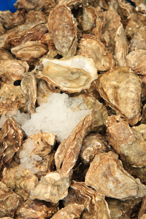 sours: Fresh Oysters at a French market Stock Photo