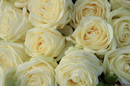 bridal bouquet: White roses in a bridal bouquet