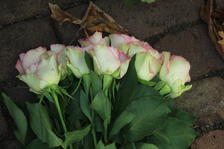 sympathy flowers: Pink roses on the pavement of  cemetery