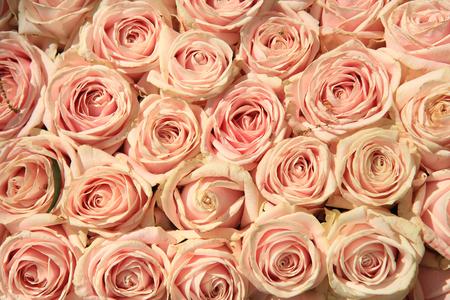 結婚式のフラワーアレンジメントのピンクのバラ 写真素材