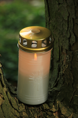 candlelight memorial: Memorial candle, burning on a tree at a cemetery