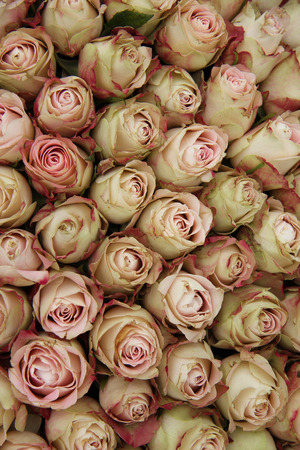 centerpiece: Pale pink rose buds with a touch of red in a wedding centerpiece Stock Photo