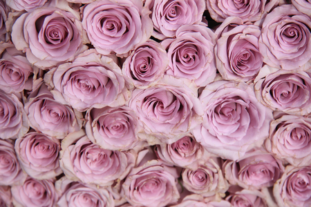 purple roses: Purple roses in a big floral wedding arrangement