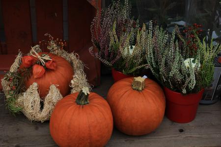 sorts: Various sorts of pumpkins for fall decorations