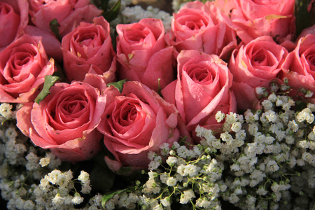 Pink roses and baby breath (gypsophila) in a wedding arrangement Stock Photo