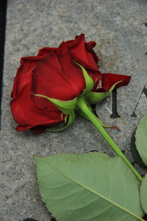 gravestone: A red rose on a grey gravestone