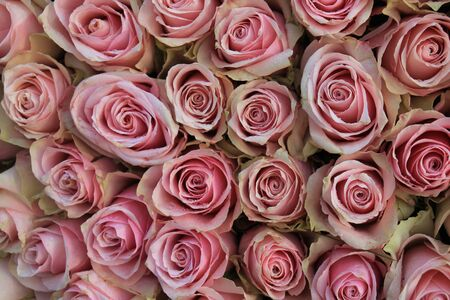 mixed marriage: Big pink roses in a floral wedding decoration