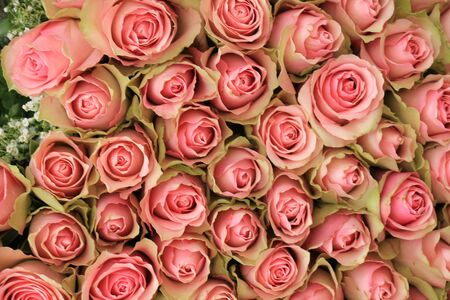 mixed marriage: A big group of pink roses in a wedding decoration piece