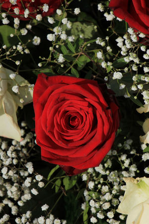 mixed marriage: Classic white and red roses in decorative floral arrangement