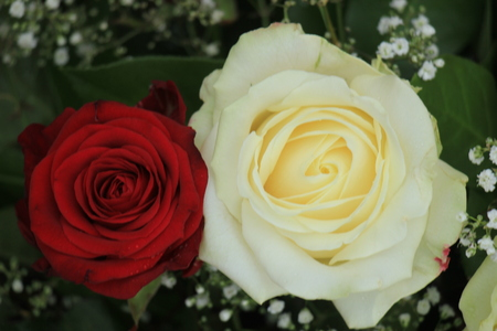 mixed marriage: Red and white roses in a classic wedding bouquet Stock Photo