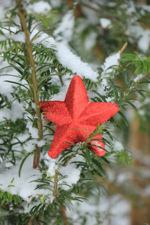 Red star ornament on a snow covered pine branch
