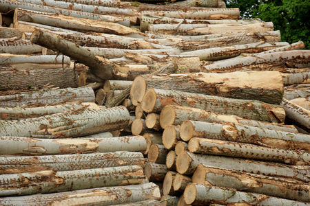 Big piles of chopped fuel wood in a forest Stock Photo