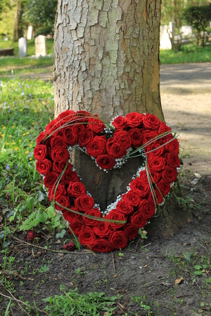 Heart shaped sympathy flowers or funeral flowers near a tree, big red roses
