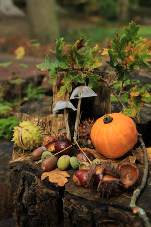 Autumn still life in a fall forest: mushrooms, chestnuts, pumpkins and leaves