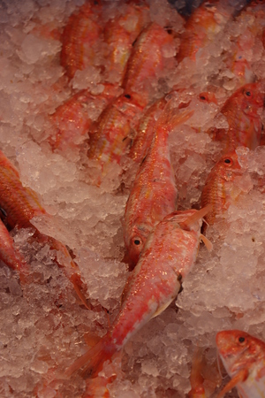 Prawns on ice on a local fishmarket Stockfoto