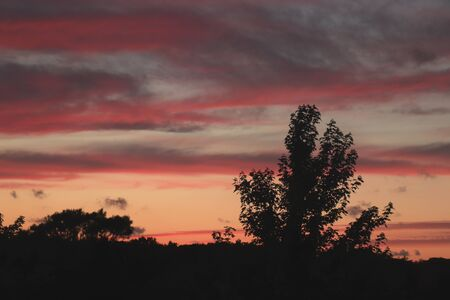 Colorful midsummer sunset sky with silhouettes of trees