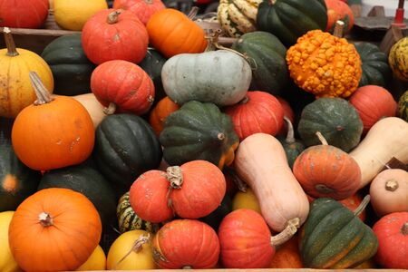 Autumn decorations, pumpkins in various shapes and sizes