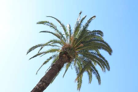Coconut palm tree on blue sky background Фото со стока