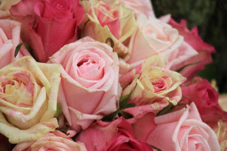 Mixed pink roses in a floral wedding decoration Standard-Bild