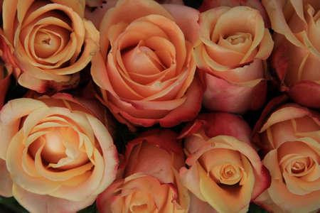 Multicolored vintage look wedding roses in pink, yellow and orange