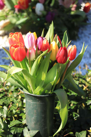 A colorful tulip bouquet representing spring colors