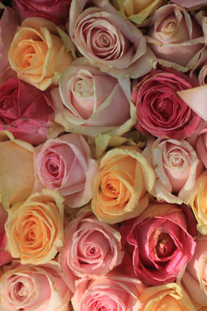 Pastel roses in various shades in a wedding arrangement Standard-Bild