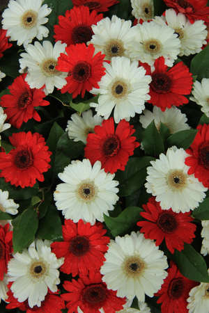 Red and white gerberas in a wedding arrangement