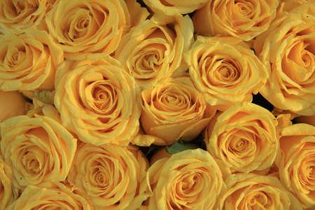 yellow roses in a floral wedding arrangement Standard-Bild