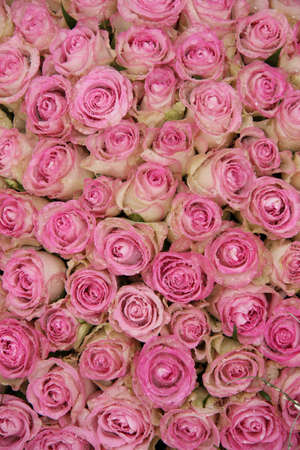 Group of pink roses and waterdrops, part of a floral wedding arrangement