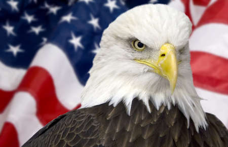 Bald eagle with american flag out of focus