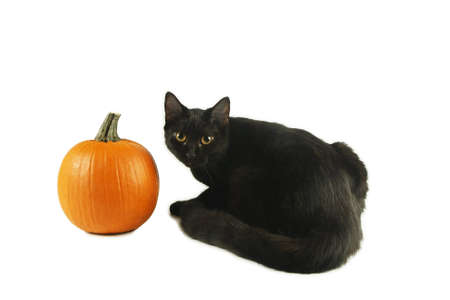 large pumpkin: Black cat with green eyes by Pumpkin Stock Photo