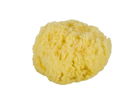 Natural sea sponge, isolated on white Stock Photo