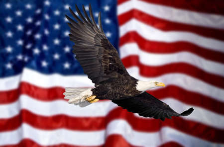trademark: Bald eagle flying in front of the American flag