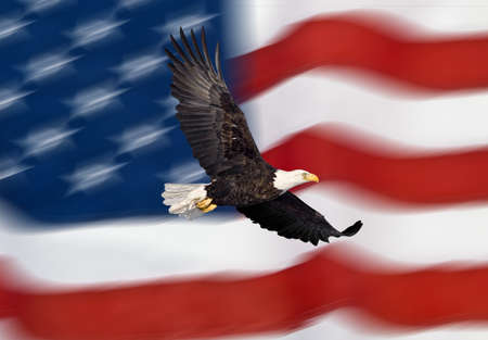Bald eagle flying in front of the American flag photo