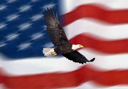 hawks: Bald Eagle volare davanti alla bandiera americana Archivio Fotografico