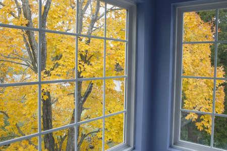 Herfst uitzicht van esdoorn boom uit raam
