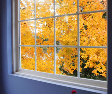 Autumn view of maple tree from window photo