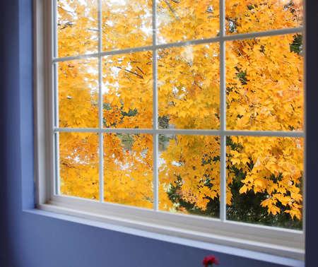 case colorate: Vista di autunno di acero dalla finestra