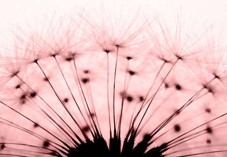 dandelion in red Stock Photo - 14884554