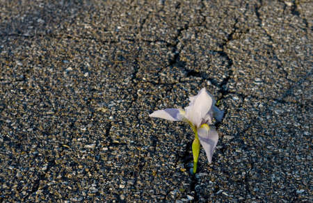 crack: Beautiful flower growing on crack in old asphalt pavement