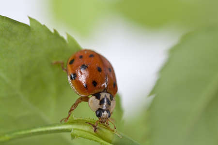 Close up of lady bug on plant  photo