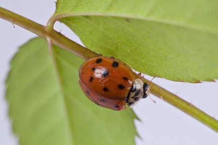 Close up of lady bug on plant  photo