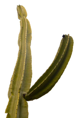 prickly: Prickly cactus