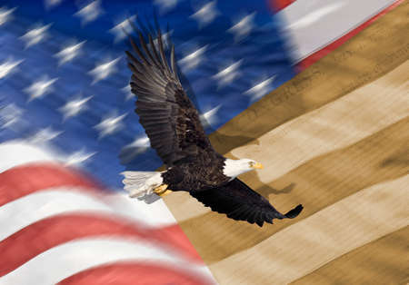 American Flag, flying bald Eagle and Constitution montage photo