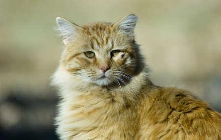 caes: Gato naranja mirando fuera en el oto�o